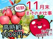 ★時給1000円★高時給のお仕事です!働いているうちにリンゴに愛着を持ち始めちゃいます♪