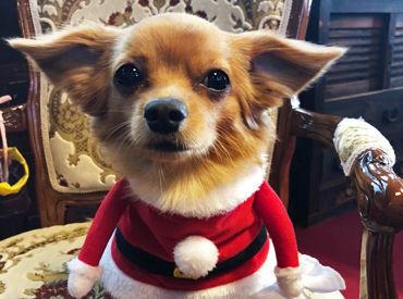 みんなのアイドル犬!ロマン君*+。 利用者さんだけでなくスタッフも癒されながら過ごしています◎