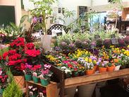 季節ごとにたくさんのお花が店内に並びます☆見ていて飽きないですよ♪お花の名前を知らなくても、先輩が丁寧に教えます!