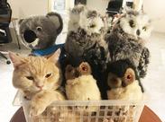 オフィスの癒し担当♪ 犬・猫と一緒に働けるオフィスです◎ スタッフみんなで可愛がっています☆