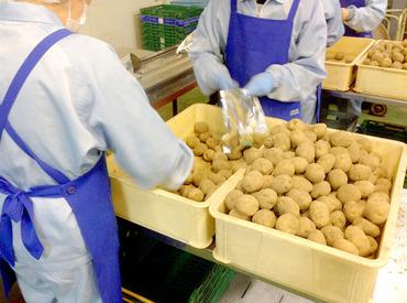 【選別・洗浄・加工STAFF】=冬から春にかけての短期★=\長期も歓迎/セイコーマートグループの野菜加工場に勤務◎野菜の選別・洗浄・加工業務です♪
