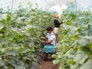 農業に興味のある方、夏限定で新しいお仕事を始めませんか?北栄ファームは農作業全般に関わることが出来ます◎