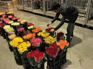 お花を扱うので、重たい作業はほとんどありません◎ 空調設備も整っていて働きやすいですよ♪