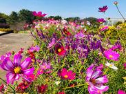 季節を彩るお花がいっぱい*゜キレイな景色を見ながらのびのびとお仕事してみませんか??未経験者さん大歓迎です!