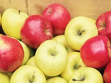 【りんご販売サポート】シフト・売る場所・おしゃれ…全部アナタ次第!≪青森直送≫絶品りんごを、車に乗って売りにいこう★卒業までの短期もOKです◎