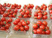 広い選果場での、熊本の農作業を支えるお仕事!和気あいあいとした職場なので作業しながらおしゃべりも★