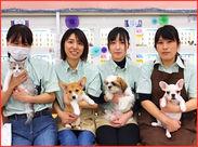 ◆[ペットアミ]は可愛いペットがたくさん!!◆ 犬・猫・観賞魚・小動物(兎・小鳥etc) など 様々な動物たちのお世話をしてます♪