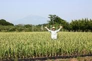 青森県といえば、りんご、にんにく♪にんにくの植え付け、りんごの収穫が主なお仕事です!