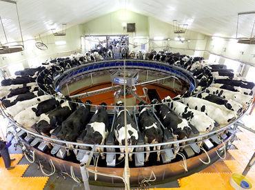 *広大な自然の中で伸び伸びと働きたい方 *イチから酪農を勉強したい *牛や動物が好き そんな方を歓迎します◎