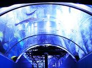 <次の職場は水族館?!!> 透明度の高い富士の湧水をつかった淡水魚専門の水族館です♪ゆったり泳ぐお魚を観て気分もリラックス♪