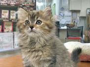 犬・猫・ハリネズミ・ウサギ…小動物に癒やされちゃう♪「ペットを飼ったことがないから不安」という方ももちろん大歓迎です!