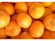 今年も柿・みかんの季節が来ました♪ 年齢・経験・性別etc…、全て関係なく、どなたも活躍できるお仕事!STAFF大量募集中です★