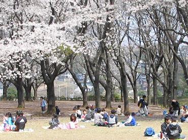 子どもたちはみんな遊ぶことに一生懸命♪今の時期は、一緒に桜を観に行くことも*季節ごとに様々なイベントがあります★
