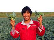 スタッフさんにはお野菜の支給あります! 自分たちで育てた作物だから、とっても美味しい!