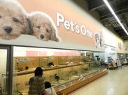 """カワイイ子犬も販売しています★"""" こちらのワンちゃんたちもキレイにしてください♪"""