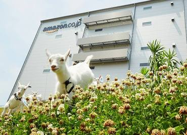 【Amazon倉庫内作業】6月末までの短期OK!amazonで夜勤のお仕事♪1回の勤務で1万1000円以上☆残業の有無が選べます!勤務時間の相談もOK!