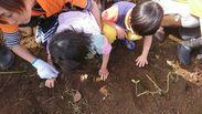 お芋掘りの時の写真です☆上手くできるようにサポートをお願いします◎ご経験がある方は活かせますよ♪もちろんなくてもOK