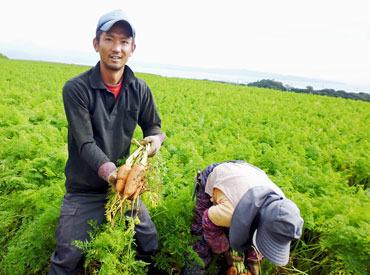 【にんじんの収穫】\とってもカンタン/収穫したり 葉っぱを落としたり農家のお手伝い♪●日給6375円~(+手当あり)●服装・髪型自由●送迎あり