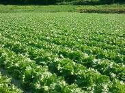 ≪未経験から始める農作業≫そのうち育てている野菜が可愛く見えてきますよ!