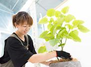 植物を育てたことがない方も大歓迎◎経験・資格等は一切不問です!まずはお気軽にご応募ください♪
