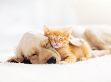 ~*わんにゃんさとおや会*~ 殺処分ゼロを目指して、 保護犬・保護猫達の譲渡活動を行っています◎ 社員希望の方も同時募集中!