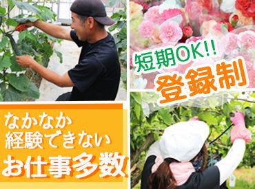 ≪学生さん~シニアの方まで、幅広く歓迎≫ ココでしかできない経験が待っています! 野菜や果物作りなどを体験してみませんか?