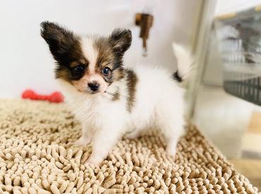 ずーっとペットたちに囲まれて…♪ 癒したっぷりのオシゴトです◎ 未来の飼い主さんとペットの出会いをサポートしませんか♪