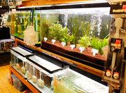 ゆらゆらと気ままに泳ぐ熱帯魚は見ていてとっても癒されます…★生き物が好きな方にピッタリのお仕事です◎
