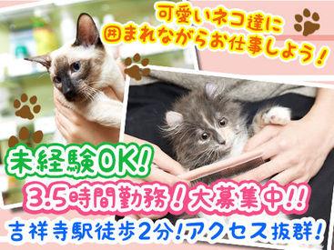 【ネコの飼育・ネコ用品販売スタッフ】☆・。可愛いネコ用品に囲まれてお仕事しませんか?・。☆   《未経験大歓迎!》《猫ちゃん好きにはたまらない!!》