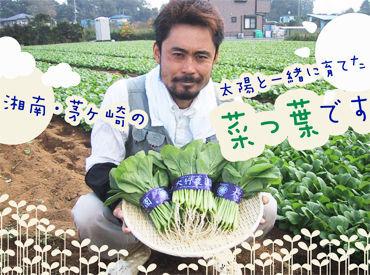 減農薬栽培にこだわった、菜っ葉の専門農家◎安心のお野菜は勤務後にお持ち帰りもできちゃいます♪家計にも優しい♪