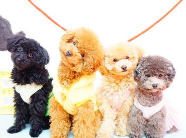 現在8匹の可愛らしいわんちゃんStaffが活躍中★*お気に入りのコもきっと見つかるはず♪