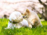 ~可愛いわんちゃんに囲まれて♪~ \1月まで/スキな1週間からOK♪ 「友達と」「扶養内で」「お試しで」…ALL◎(イメージ画像)