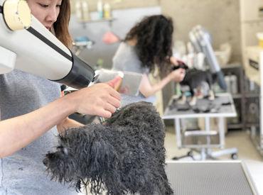 【トリマー】☆★ペット好き歓迎★☆かわいい犬猫と触れ合えるお仕事♪《週3日~》経験ナシでもOK!経験者は高時給スタートも可能です!