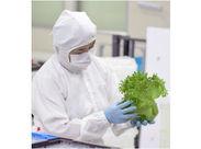 フリルレタスやロメインレタスなど…すくすく育つ野菜の様子が見られるのも楽しみの一つ…★*