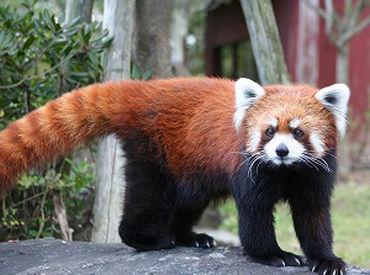 長崎を代表する動植物園!可愛い動物達と、こどもの笑顔で楽しさUP↑↑*゚+お気軽にご応募くださいね♪