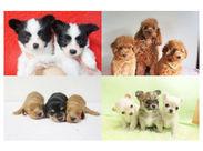 パピヨンをはじめとした小型犬を専門とするショップ&サロンなので、動物のお世話経験がない方もスタートしやすいです♪