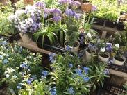 ボタニカル空間の中で癒されながら…♪お気に入りの子(植物)たちは、スタッフ特典でお得に購入できます♪