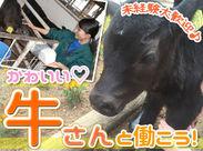 かわいい牛たちの成長が間近で感じられます◎「食」の大切さについても学べるお仕事です!