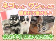 6月中旬OPEN予定☆新しい店舗で働きませんか? 大好きな動物たちに囲まれて、一緒に楽しいお店を作りましょう♪