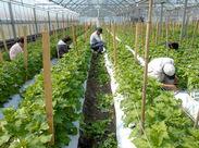 野菜の育て方のコツやおいしい調理法など 農家さんの知識も教えてもらえますよ!! 女性スタッフを中心に幅広い年齢層が活躍中◎