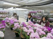 お花が好きという方にぴったりなお仕事です。品種改良した珍しい胡蝶蘭がいっぱい♪お花の知識は少しずつつけていきましょう。