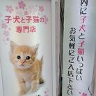 <町田仲見世商店街入口スグ!> 動物好きのスタッフが活躍中です♪ 接客・販売未経験の方歓迎!