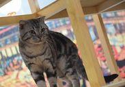江戸ねこ茶屋の猫の多くは、 いろいろな事情で飼うことができなくなってしまったり捨て猫となってしまった<保護猫>たちです*+