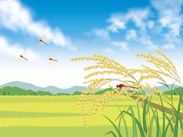 【生産・収穫STAFF】幅広い年齢層の方が活躍中「自然が大好き」「自然を満喫したい」そんな方大歓迎◎トラクター等の運転はないので安心♪