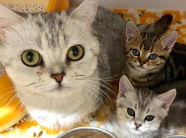 【ペットショップSTAFF】『か..かわいすぎる..(*´ω`pq』ネコ、イヌ、ウサギ、ハムスターetc..愛嬌たっぷりの動物たちに囲まれてお仕事しませんか♪*