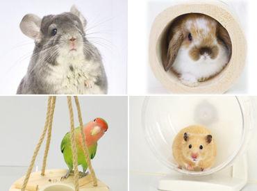 ハムスター、うさぎ、小鳥にチンチラ… 小動物の飼育用品なので、重い物はナシ◎ 扱いやすいサイズの物ばかりです★
