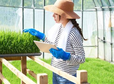 晴れの日の畑や田んぼは、と~っても気持ちよく働けます◎ 幅広い世代の方が活躍可能! 学生さん・シルバーさんも大歓迎♪