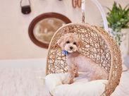 看板アイドル犬のウールちゃんです♪他にもたくさんのワンちゃんたちが日々宿泊にきてくれますよ◎
