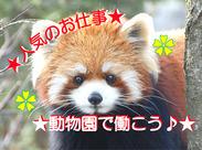 ≪人気の動物園内SHOP≫可愛らしいぬいぐるみで癒されたり、いろんな種類のお土産に囲まれて楽しく働けますよ♪