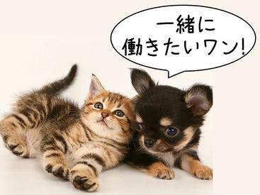 動物好きな方歓迎♪研修があるのでペットショップ未経験の方やペットを飼ったことがないという方でもOK◎